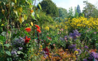 Pirita-aiaklubis-aialoeng