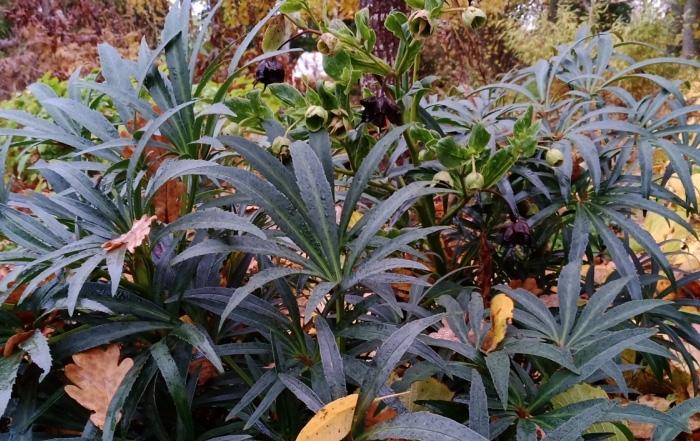 aialoeng-kas-sa-neid-varjuaia-taimi-juba-tunned